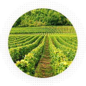 Восъчни смеси за лозарство и овощарство