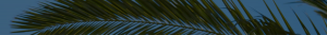 Кокосов восък 2
