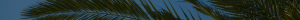 Палмов восък 2