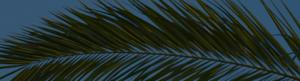 Палмов восък