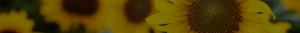 Слънчогледов восък